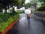 【SSR会】 久しぶりのたぬき 散歩♪