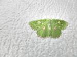 居酒屋『川』10.08 2日目 クーラーに付いたキレイな蛾