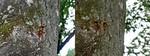 居酒屋『川』13.09 9月の残暑(ノД`)・゜・。 1日目 スズメバチいっぱ〜い(屮゜Д゜)屮